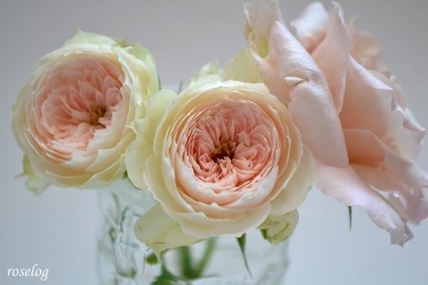 バラの画像 おしゃれ