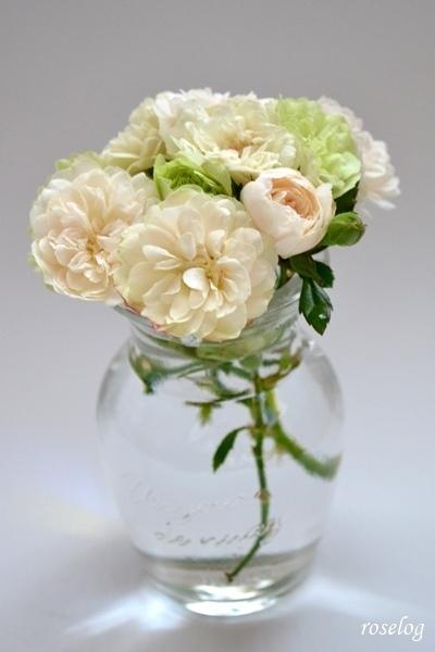 グリーンアイス バラ