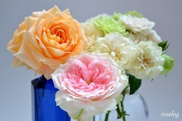 薔薇 画像