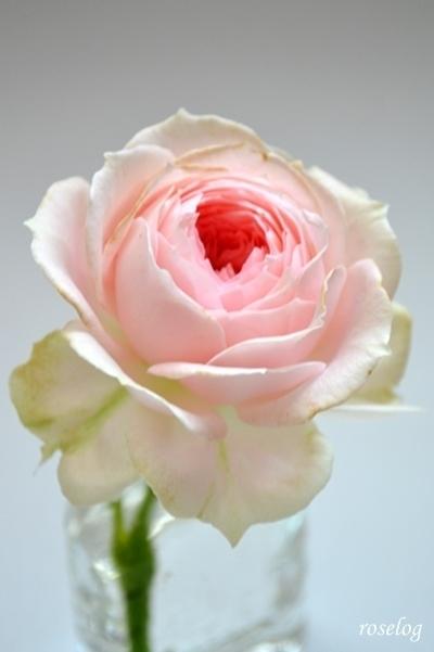 パシュミナ 花もち