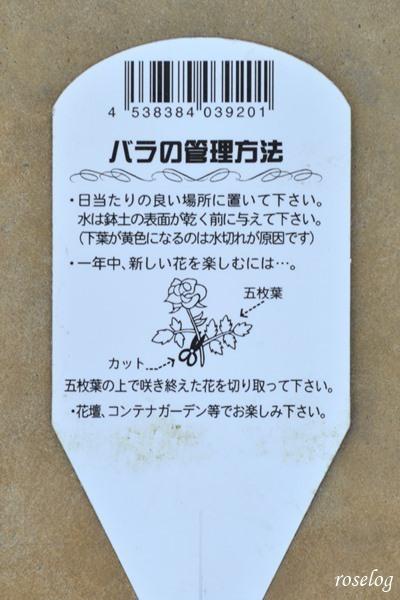 20200430ミニバラ モカフェローズ4.JPG