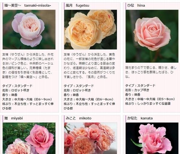 環 美空 切り花画像.jpg